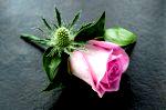 DSC 1564 150x99 Flower photography at Poppy floral design in Marple