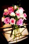 DSC 1574 99x150 Flower photography at Poppy floral design in Marple