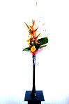 DSC 7720 Edit 99x150 Flower photography at Poppy floral design in Marple