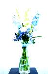 DSC 7731 99x150 Flower photography at Poppy floral design in Marple