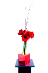 DSC 7735 Edit 2 99x150 Flower photography at Poppy floral design in Marple