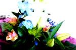 DSC 7754 150x99 Flower photography at Poppy floral design in Marple