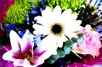 DSC 7801 150x99 Flower photography at Poppy floral design in Marple