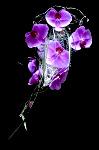 DSC 8652 99x150 Flower photography at Poppy floral design in Marple