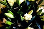 DSC 9802 150x99 Flower photography at Poppy floral design in Marple