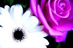 DSC 9817 150x99 Flower photography at Poppy floral design in Marple