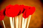 DSC 9835 150x99 Flower photography at Poppy floral design in Marple